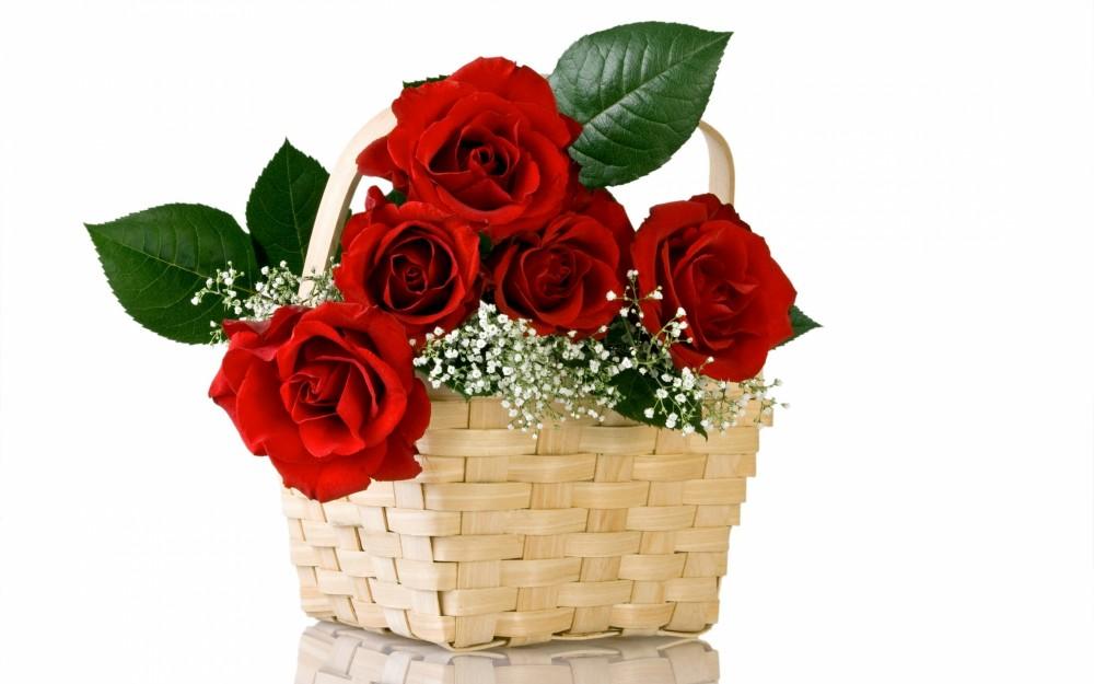 Thơ về hoa hồng hay nhất